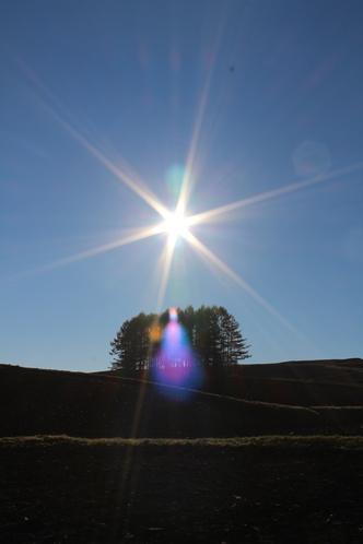 カラ松と日の出