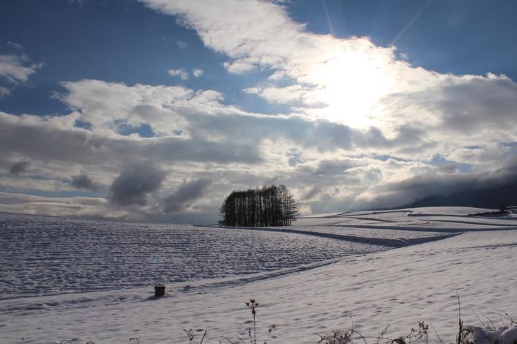 カラマツと浅間山 冬