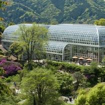 県立牧野植物園(高知市)