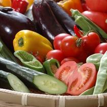 ○高知のとれたて野菜