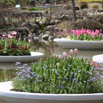花士鉢ー庭園