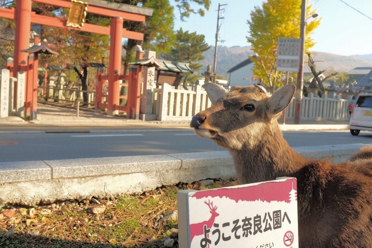 奈良公園まで電車で約60分