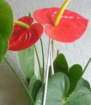 【3月】シュプールや草津周辺で育つ植物