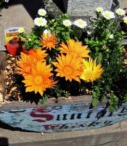 【5月】シュプールや草津周辺で育つ植物