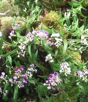 【2月】シュプールや草津周辺で育つ植物