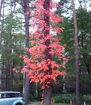 【10月】シュプールや草津周辺で育つ植物