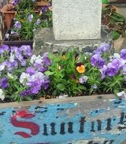 【4月】シュプールや草津周辺で育つ植物