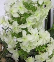 【7月】シュプールや草津周辺で育つ植物