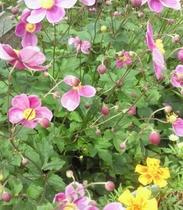 【9月】シュプールや草津周辺で育つ植物