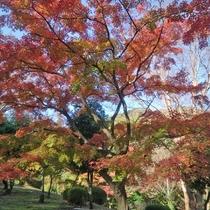 [紅葉]秋の丸山公園
