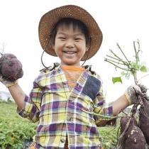 農業体験:お子様にとっては農業体験だって立派なアクティビティ♪こんなに沢山採れました!