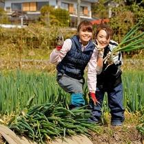 農業体験:朝来名産の岩津ネギの収穫体験(有料)