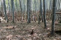 自家所有の竹林