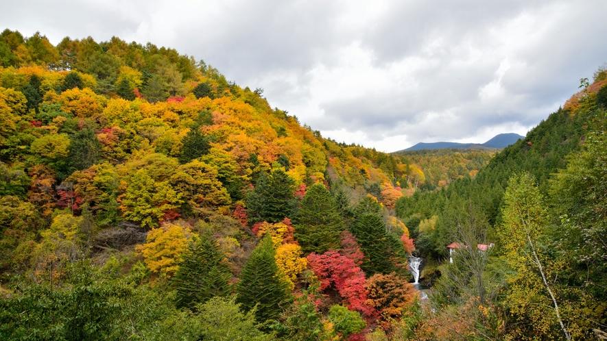 【周辺観光】おしどり隠しの滝(秋)