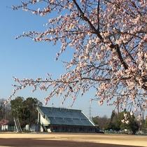 ■熊谷さくら運動公園■当ホテルから約5分。野球の試合はもちろん、お花見も最高です