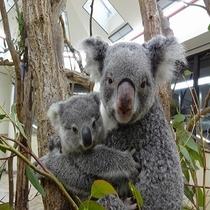 ■埼玉県こども動物自然公園■ホテルから約38分(距離:約21.5Km)