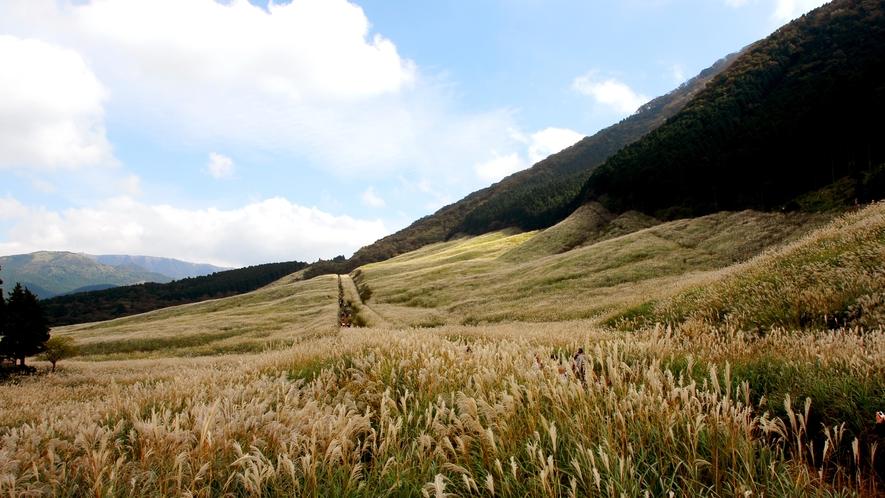 仙石原ススキ高原
