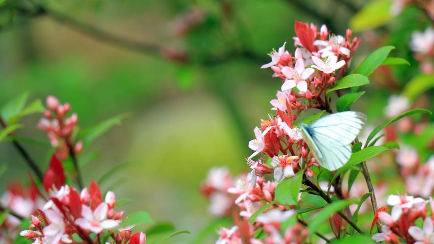 春 敷地内の草木花