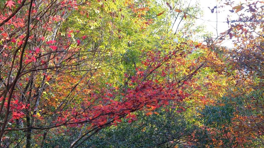 敷地内の紅葉の様子