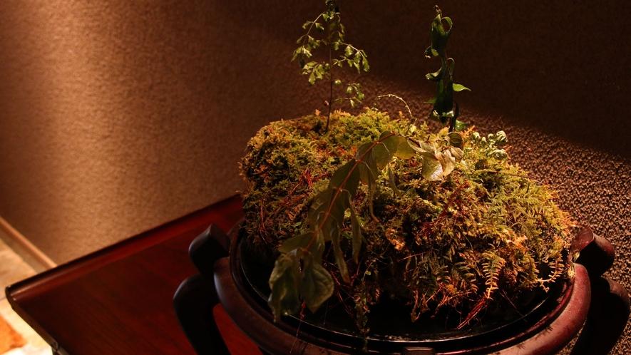 館内に飾ってある苔