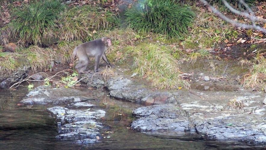 猪八重渓谷で森林セラピー