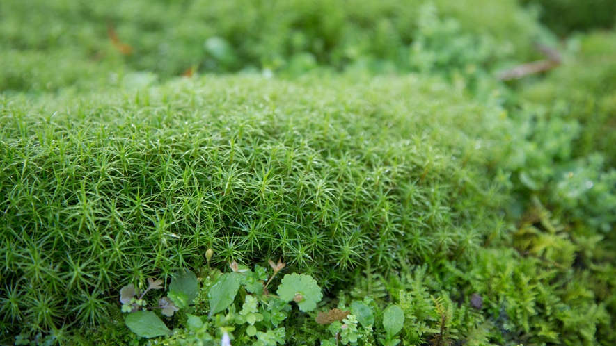 新緑 敷地内の草木花
