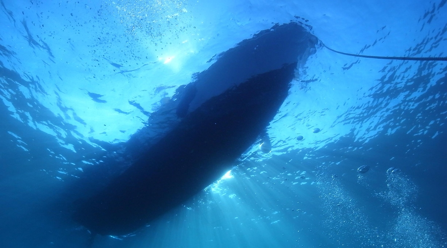 【体験ダイビング】この大きい影は・・?