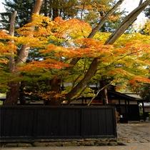 【秋】 紅葉の武家屋敷通り