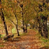 【秋】 紅葉の桧内川提