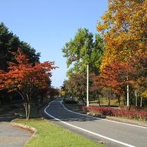 *[紫雲寺記念公園/紅葉]秋・例年見頃は11月上旬~中旬