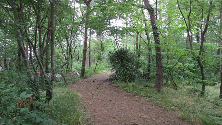 *[紫雲寺記念公園/探鳥路]鳥の囀りを聞きながら森林浴を楽しめます