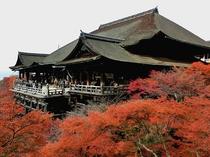清水寺 秋 京都まで当館すぐのバス停より直通高速バス約45分 (1時間に1本運行)