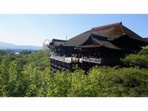 清水寺 夏 京都まで当館すぐのバス停より直通高速バス約45分 (1時間に1本運行)