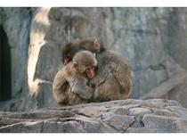 天王寺動物園 ニホンザル