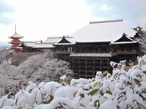 清水寺 冬 京都まで当館すぐのバス停より直通高速バス約45分 (1時間に1本運行)