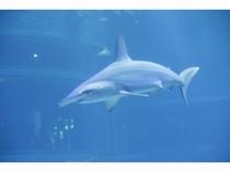 海遊館 サメ1