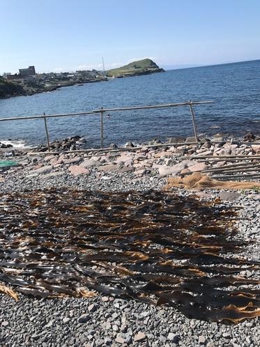 当館裏の海岸