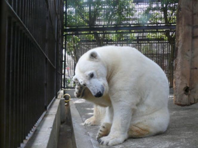 砥部動物園(お車で約30分)