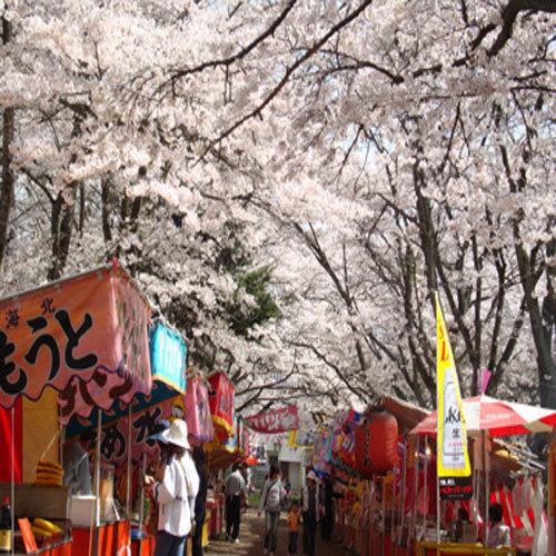 桜露天500