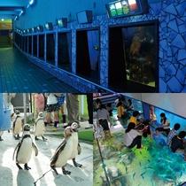 【周辺・景観】越前松島水族館<イメージ>