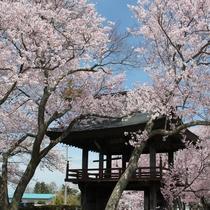 原村の中でも特に桜の名所として知られる深叢寺