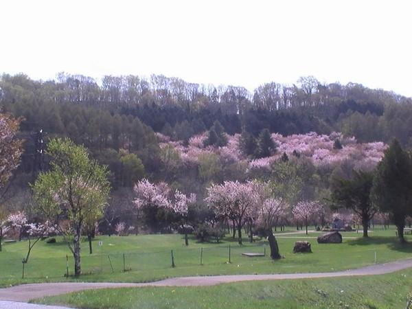 《風景・春》
