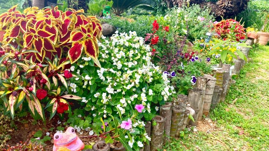 ・庭には色とりどりの花と草木があります