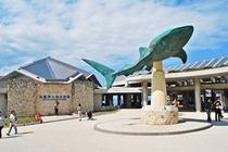 周辺スポット「美ら海水族館」