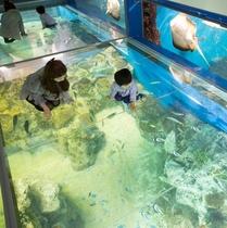 松島水族館(海の上に立てる人気のコーナー)