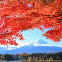 【富士山ギャラリー】紅葉と富士山