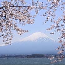 【富士山ギャラリー】桜と富士山