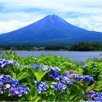 【富士山ギャラリー】あじさいと富士山