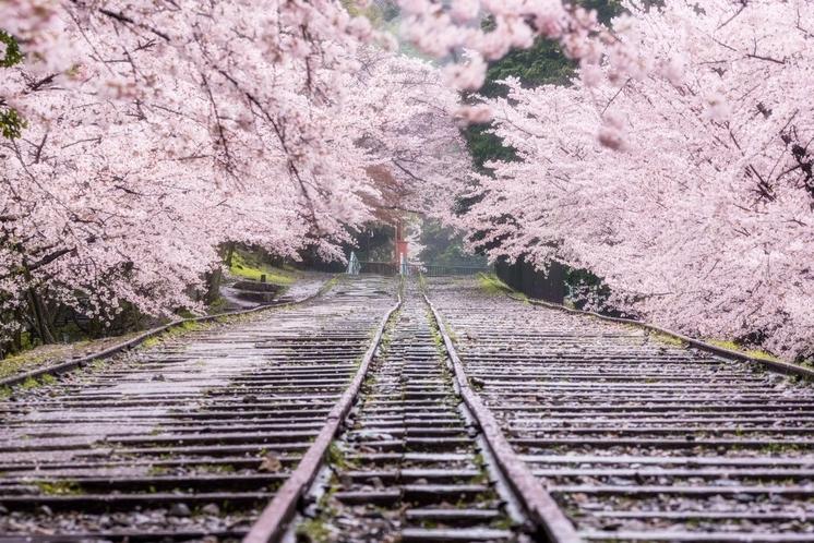 京都で花見を満喫に♪