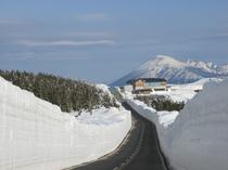 春の八幡平名物「雪の回廊」